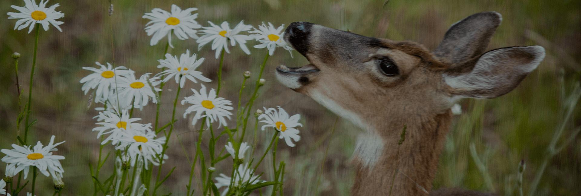 Deer Repellent Specialists®