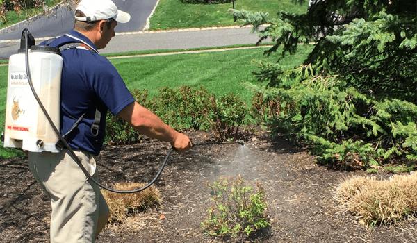 nj-deer-control-spraying-services